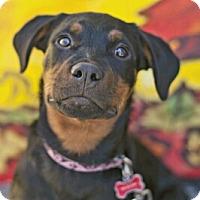 Adopt A Pet :: Elsie Rose - LITTLETON, CO