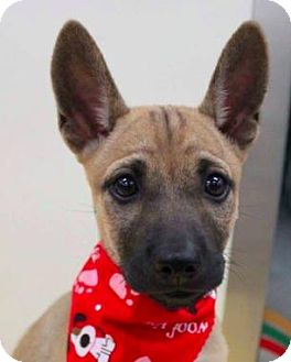 Shepherd (Unknown Type)/Terrier (Unknown Type, Medium) Mix Dog for adoption in San Ramon, California - Yuki