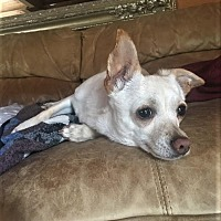 Adopt A Pet :: Chloe - Woodinville, WA