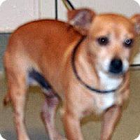 Adopt A Pet :: Canicas - Wildomar, CA