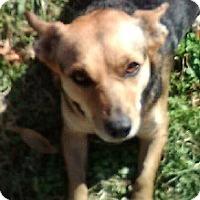 Adopt A Pet :: Roxy - Bartlett, TN