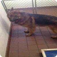 Adopt A Pet :: BRUNO - Waynesville, NC