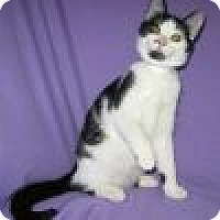 Adopt A Pet :: Robbin - Powell, OH