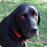 Adopt A Pet :: Toby - Hollis, ME