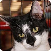 Adopt A Pet :: Doober - San Ramon, CA