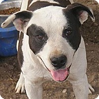 Adopt A Pet :: Holden - Ringoes, NJ
