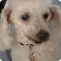 Adopt A Pet :: Ruthie - Upper Sandusky, OH