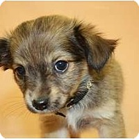 Adopt A Pet :: Alfalfa - Broomfield, CO