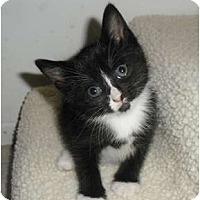 Adopt A Pet :: Kristal - Orlando, FL