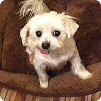 Adopt A Pet :: Gretel - Columbia, SC