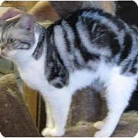 Adopt A Pet :: Alley - Davis, CA