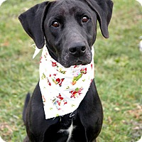Adopt A Pet :: Ozzie - Lewisville, IN