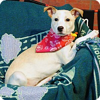 Adopt A Pet :: Penny - Weatherford, TX