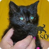 Adopt A Pet :: Ernie - Island Park, NY