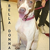 Adopt A Pet :: Bella Donna - Houston, TX