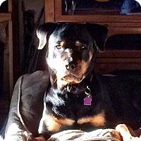 Adopt A Pet :: Kinder - Frederick, PA