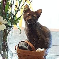 Adopt A Pet :: Guiness - Loveland, CO
