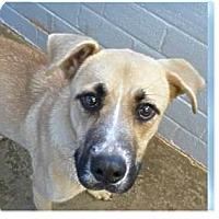 Adopt A Pet :: Victor - Springdale, AR