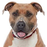 Adopt A Pet :: Asia - Los Angeles, CA