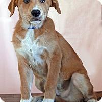 Adopt A Pet :: Michael - Waldorf, MD