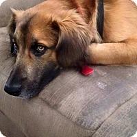 Adopt A Pet :: Willie - Oakland, AR