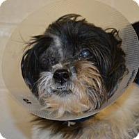 Adopt A Pet :: Winona - Miami, FL