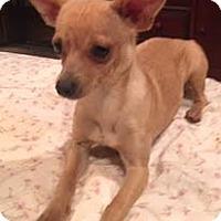 Adopt A Pet :: JimDandy-pending adoption - Manchester, CT