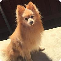 Adopt A Pet :: Zachery - Dallas, TX