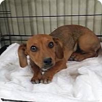 Adopt A Pet :: DOOGIE - Lubbock, TX