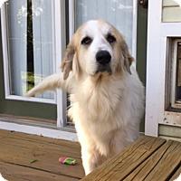 Adopt A Pet :: Mya  *Pending Adoption - Tulsa, OK