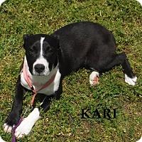 Adopt A Pet :: Kari - Batesville, AR