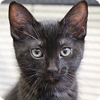 Adopt A Pet :: Una - Sarasota, FL