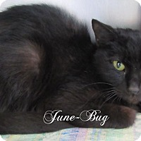 Adopt A Pet :: June Bug - Jackson, NJ