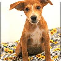 Adopt A Pet :: Honeybee~meet me~ - Glastonbury, CT