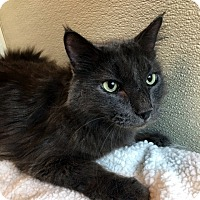 Adopt A Pet :: Teddy - North Las Vegas, NV