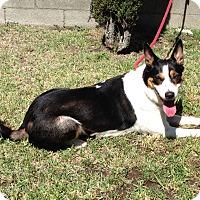 Adopt A Pet :: LUCY - San Pedro, CA