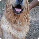 Adopt A Pet :: Gunner