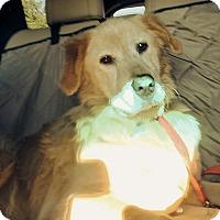 Adopt A Pet :: Skippy - BIRMINGHAM, AL