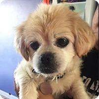 Adopt A Pet :: Johnny - San Francisco, CA