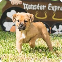 Adopt A Pet :: Lira - Santa Fe, TX