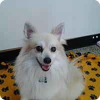 Adopt A Pet :: Kristi - Thousand Oaks, CA
