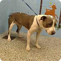 Adopt A Pet :: A499675 - San Bernardino, CA
