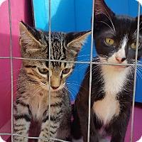 Adopt A Pet :: Tido & Toby - Ocala, FL