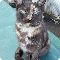 Adopt A Pet :: Praline - Los Angeles, CA