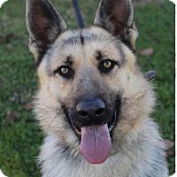 Adopt A Pet :: FRANCISCO - Red Bluff, CA