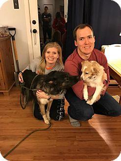 Border Collie/German Shepherd Dog Mix Dog for adoption in Baltimore, Maryland - Magnolia