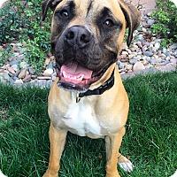 Adopt A Pet :: Finn - Las Vegas, NV