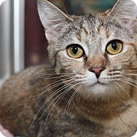 Adopt A Pet :: Marlee (Winter Special) - Media, PA