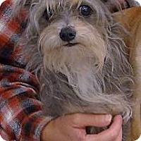 Adopt A Pet :: Pepper 8 pounds - Sacramento, CA