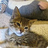 Adopt A Pet :: Benny - Richland, MI